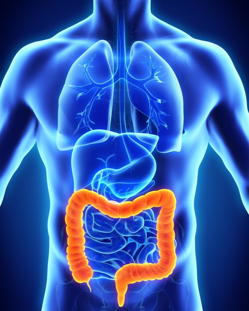 Human_Colon_Anatomy